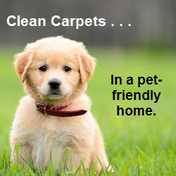 Clean Carpets in a Pet-Friendly Home
